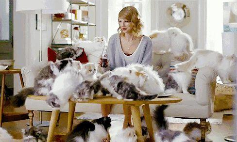 """马德里 / 没猫还想""""吸猫""""?那就去这些猫咖啡馆!"""